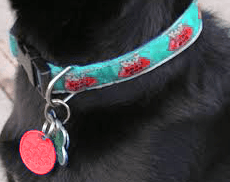 Dog collar and red tag_body